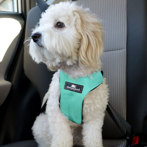 sleepypod clickit sport keep your dog safely strapped in to a seatbelt in the car