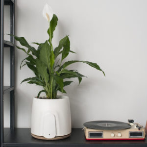 app connected house plant pot with air purifying benefits and monitoring